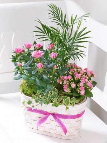 Happy Birthday Mixed Planted Basket