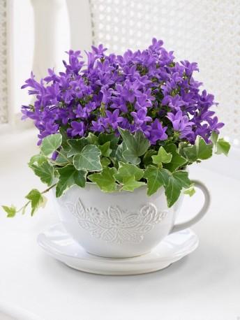 Purple Campanula Teacup