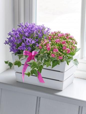 Happy Birthday Summer Flowering Planter
