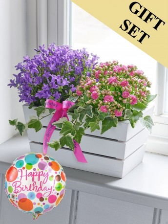Happy Birthday Summer Flowering Planter with Happy Birthday Balloon