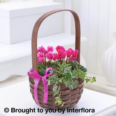 Happy Birthday Pink Cyclamen Basket with Chocolates