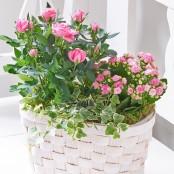 Pink Rose & Kalanchoe Basket