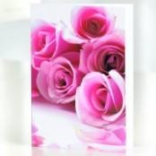 Pink Rose Greetings Card
