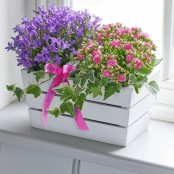 Happy Birthday Summer Flowering Planter