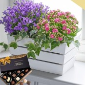 Summer Flowering Planter with Chocolates