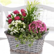 Mixed Planted Basket